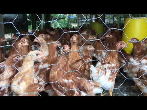 Treasures Behind The Hill: A Visit to Cottage Industries and Farms in Balik Pulau