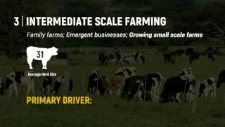 Improving the Viability of Dairy Farming in Zimbabwe