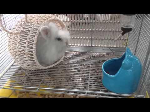 Lồng nuôi thỏ PET.MON. Tại pet shop miền đất hứa