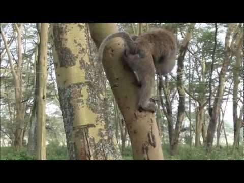 Overland Tour Part 1 - Kenya
