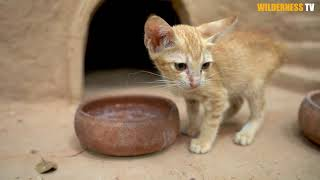 Cat Rescue And Feeding Cat Building Amazing Great Wall Around Mud Castle Cat House