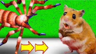 Obstacle Course with Traps Maze With Giant Spider In Hamster Stories