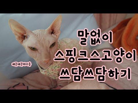 (스핑시바tv)말없이 스핑크스고양이 쓰다듬기