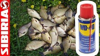 Манка с WD-40. Секретный рецепт приготовления Манки для рыбалки. Супер насадка(Манка с WD-40. Секретный рецепт приготовления Манки для рыбалки. Супер насадка на карася, плотву, карпа. пригот..., 2016-07-28T08:25:21.000Z)