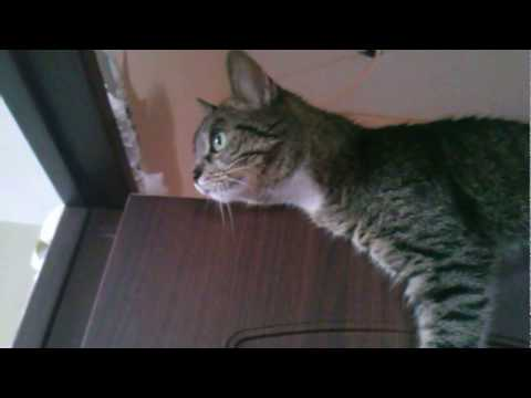 НАГЛЫЙ КОТЯРА ~ Impudent Cat
