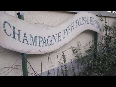 Champagne Pertois Lebrun