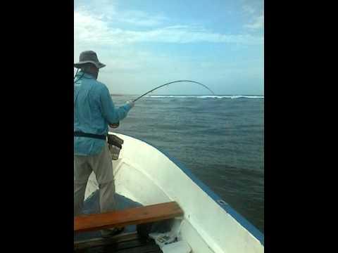 flay fish en angola Magalhães
