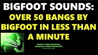 BIGFOOT SOUNDS: OVER 50 BANGS BY BIGFOOT IN LESS THAN A MINUTE (150610_002_4A3)