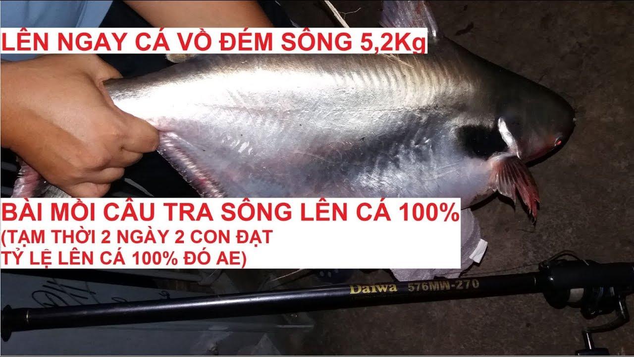 Bài mồi câu cá tra sông hiệu quả 100% (lên liền cá Vồ Đém 5,2Kg quý hiếm mừng hơn trúng số)