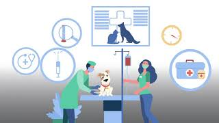 What happens when my pet comes for a dental cleaning?   Animal Hospital of Mebane