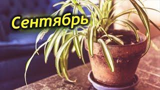 видео Сезонные цветы