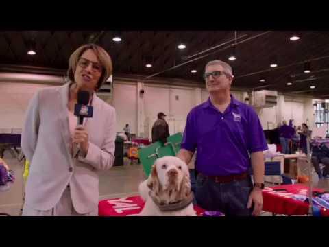 BeverlyHills Dogshow Riley   SD 480p