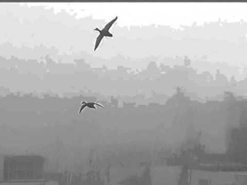 Fukushima Daiichi  Birds FINAL FLIGHT On The Beach Video #33