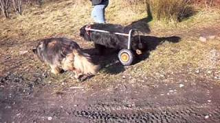 Home Made Dog Wheelchair