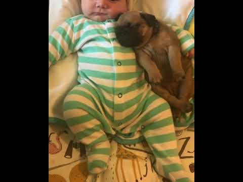Cute Baby Shares a Special Moment With His Pug Pal