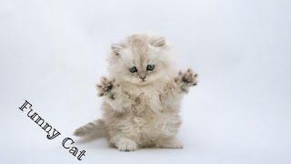 Приколы с котами (Коты дерутся) - Cats funny