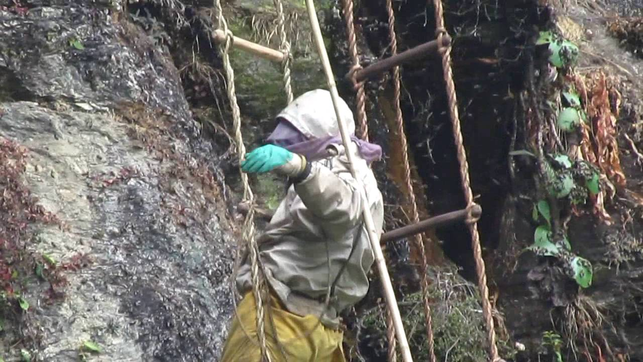 Download Bhujung Village(The best honey hunting place in my village)