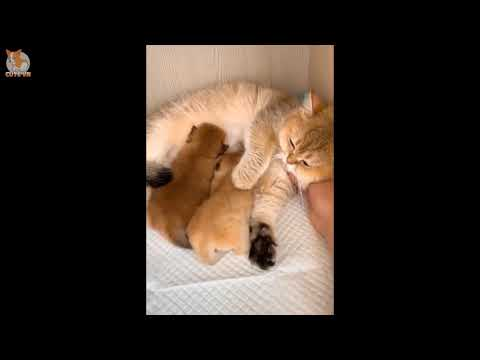 mate com   😍 Mother Cat And Kittens 🐱 Funny and Cute Cats Compilation 2020 #2   CuteVN 1080p