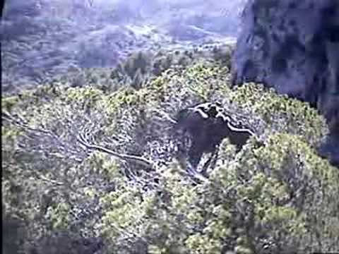 Black Vulture Nestcam #1: Intruders In The Nest