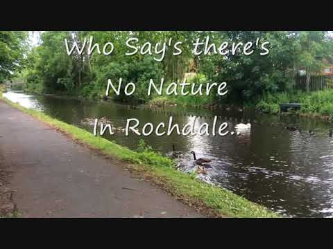 Beautiful Wildlife on The Rochdale Canal