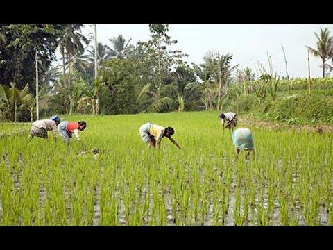 INDONESIA Tetebatu, Lombok (hd-video)