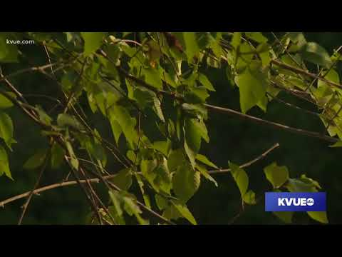 Central Texas mosquitoes test postive for West Nile virus