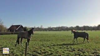 Hein en Marie Diepman (6) - Landbouw kapot, Zoon overleden, Paardengenot