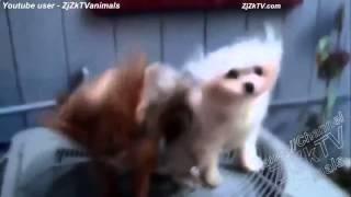ПРИКОЛЫ   Видео Приколы с животными Смешные видео кадры Приколы смотреть онлайн