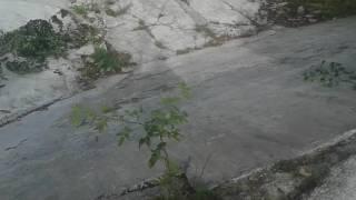 Starý bazén pod Barandovem