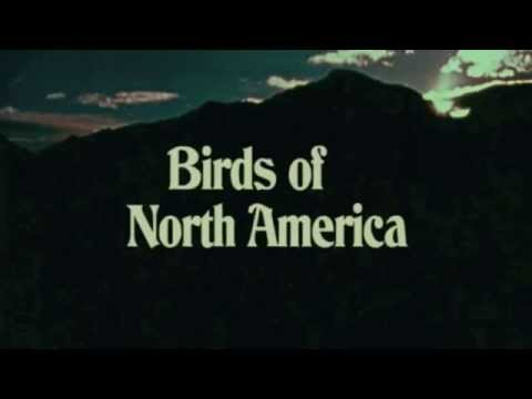 Birds of North America by PQMQ. Workshop
