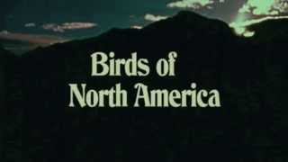Birds of North America by PQMQ. Workshop