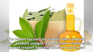 Global Laurel leaf Oil Market 2018 – Albert Vieille, Berje, Elixens, Ernesto Ventos