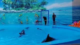 Шоу дельфинов в Джубге