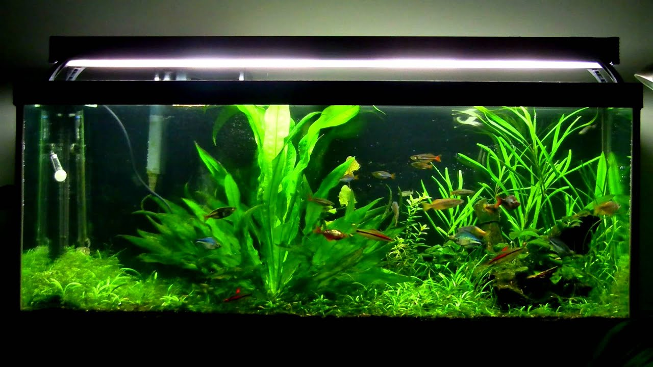 75 Gallon Rainbowfish Planted Aquarium - YouTube