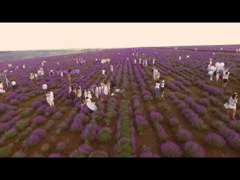 Lavender Fest 2015. Visit Moldova.
