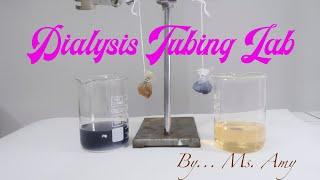 Osmosis Experiment: Dialysis Tubing Lab #hypertonic #hypotonic