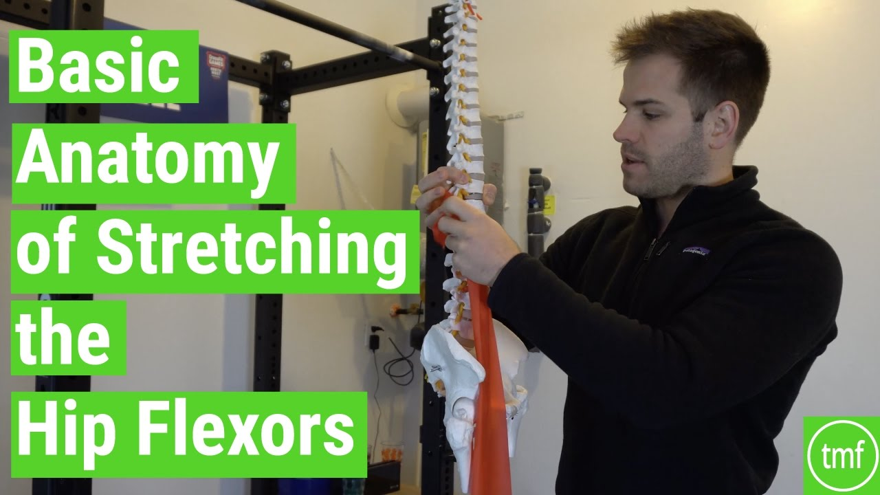 Basic Anatomy of Stretching the Hip Flexors | Ep 106 | Movement Fix ...