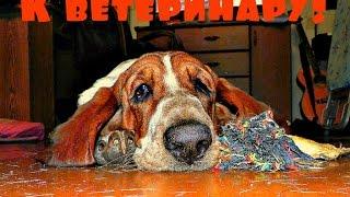Слабонервным не смотреть! К ветеринару с собакой!