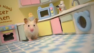 Tiny Hamster in his Tiny Kitchen II