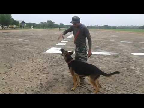Indian army dog training