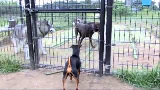 2015年6月16日 大間木ドッグランへ行きましたが、小型犬ゾーンにワンコ...