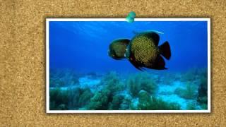Світ риб