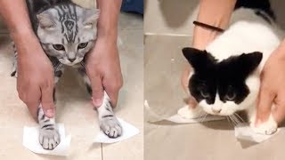 Cat Reaction to Sticky Tape - Funny Cat Tape Reaction Compilation