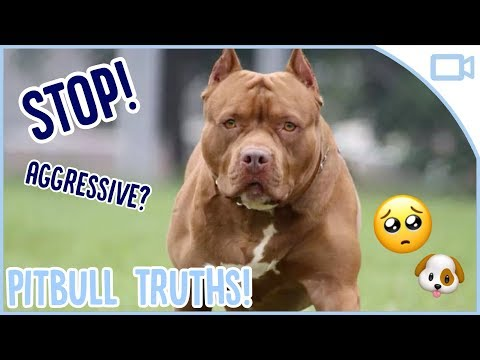 the-truth-about-pitbulls!
