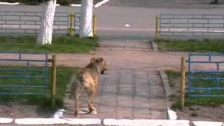 Собачьи бои(, 2011-05-01T11:19:29.000Z)