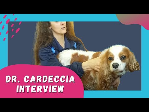 Canine Rehab for Neurological Disorders | Cavalier King Charles Physical Therapy for SM/CM