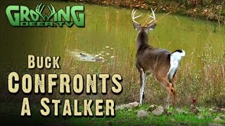 Stalking Bucks and Hunting Scrapes