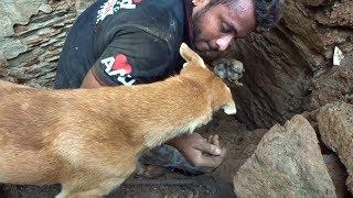 Спасатели были шокированы, когда собака начала помогать им искать закопанных щенков