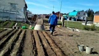 Как правильно посадить морковь(Многие садоводы не знают почему морковь зимой горчит и что надо сделать , чтобы морковь была длинной и сочной., 2015-05-15T18:34:05.000Z)