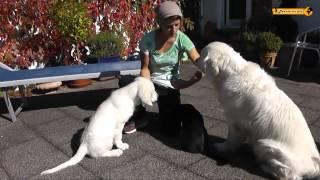 Hund + Katz   Dog And Cat  Black And White Golden Retriever